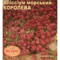 Алиссум морська Королева (НК ЕЛІТ) 0,2 г